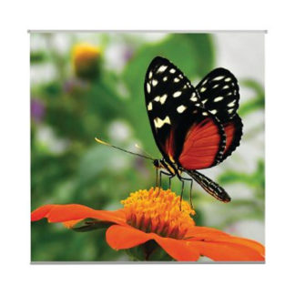 poster-butterfly