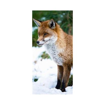 poster-fox