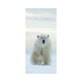 poster-polarbear
